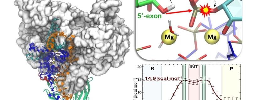 Splicing RNA